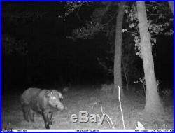 Free Range Semi Guided Wild Hog Hunts